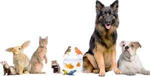 about spirit animals