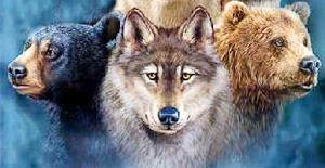 spirit and power animals