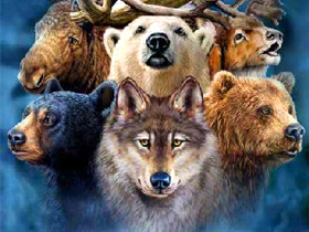 spirit animal wisdom message
